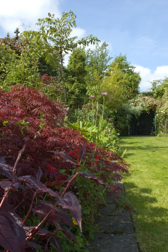 Carmel Duignan's garden