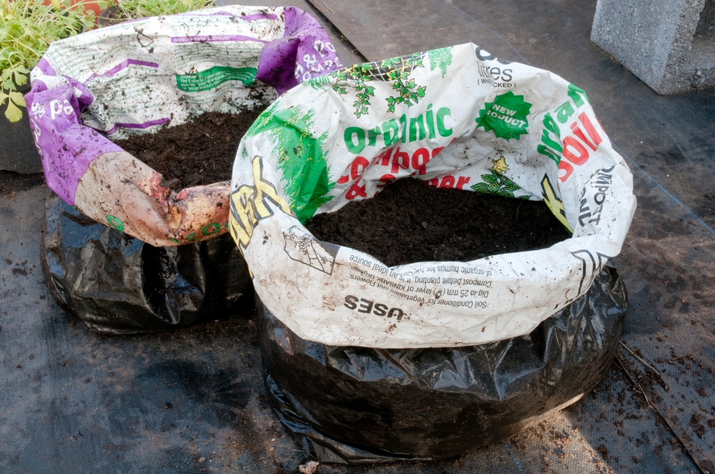 PLANTING POTATOES IN BAGS- 10 CM LAYER OF COMPOST IN BAGS