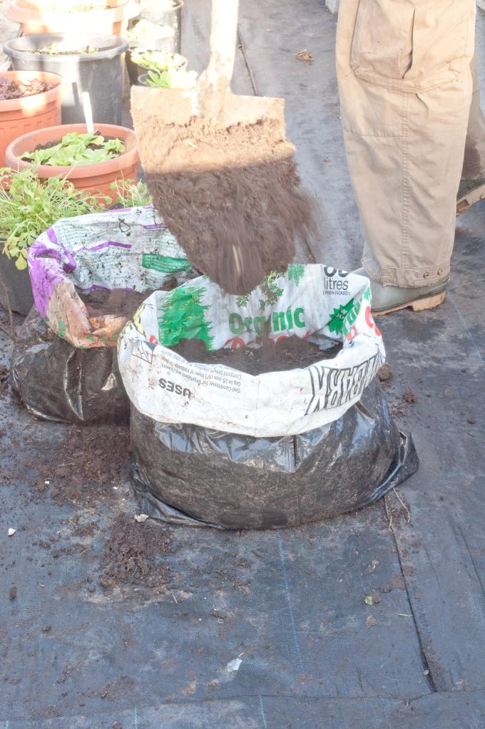 PLANTING POTATOES IN BAGS- COVERING TUBERS