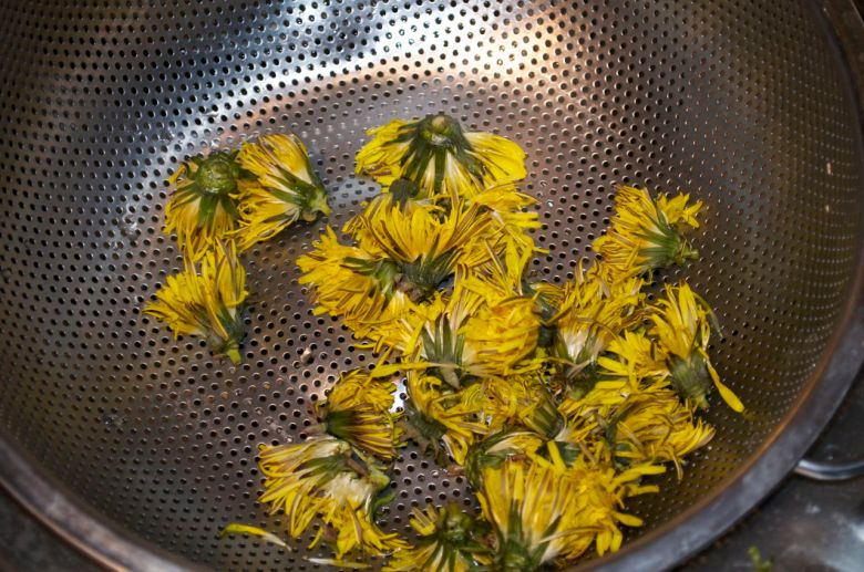 Dandelion flowers in the colander
