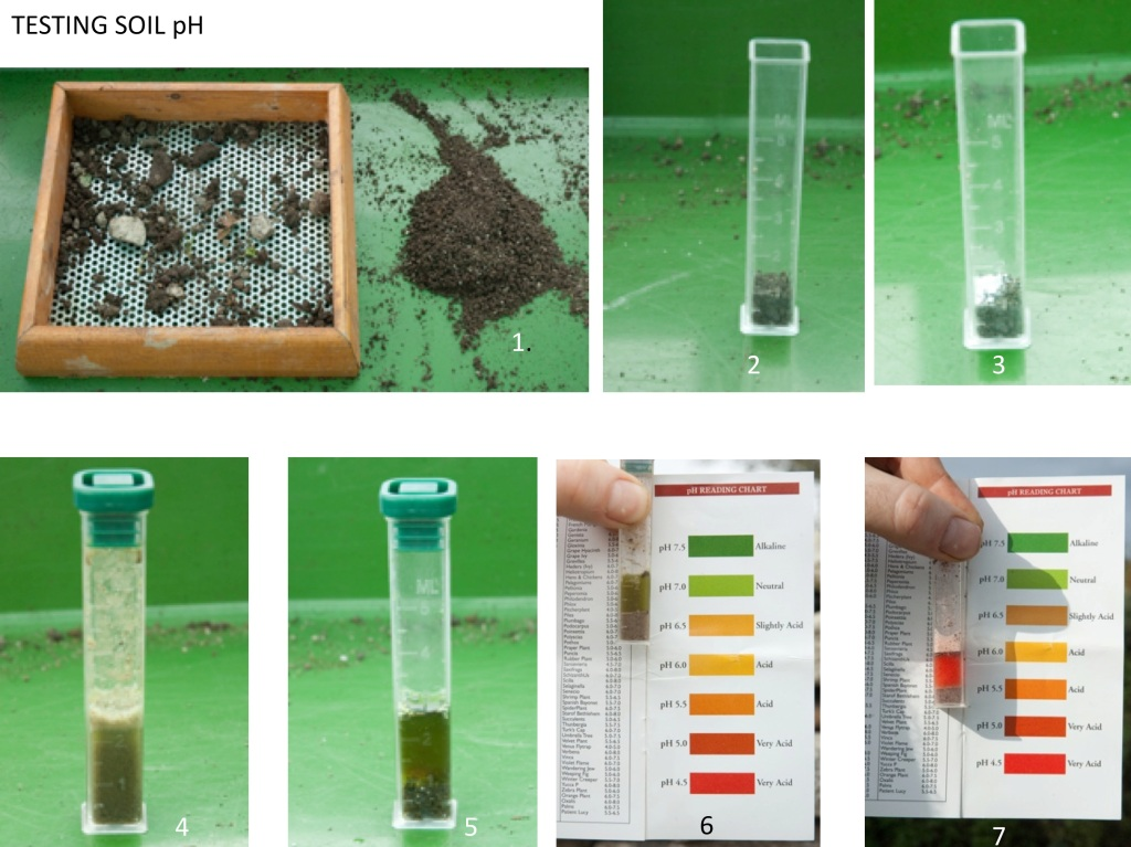 Testing soil for ph its easy blooms 39 n 39 food for Soil testing