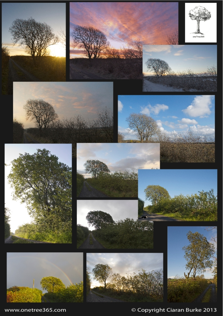 onetree365-12 month collage