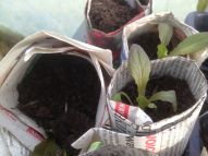 Seedlings full of promise
